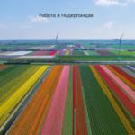 Советы по поиску работы в Нидерландах